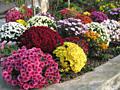 Продаю Цветы(рассаду и семена) разные ягодники и удобрения.......