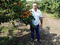 Pomi fructiferi - pomi cais (абрикос) Kioto, Faralia, Krasnoșioki..