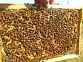 Пчелосемьи, отводки