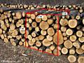 Cumpar lemn de foc bustean 250 ms/luna