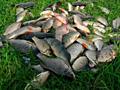 Сети рыболовные- высшее качество- успей купить осталось очень мало