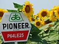 Seminte Floarea Soarelui, Porumb, Rapita (PIONEER)