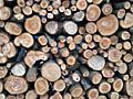 Пилю дрова, валю деревья.