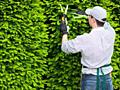 Садовник, обрезка сада, садовых деревьев, уход за садом Одесса