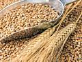 Кукуруза Пшеница ОПТ и розн.