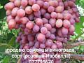 Продам саженцы винограда сорт (Розовая Изобелла).