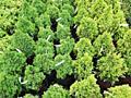 Sortiment nou de plante decorative