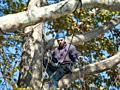 Бензопильщик. Aрборист. Распиловка деревьев в труднодоступных местах