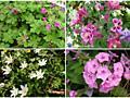 Растения которые растут в тени!!!