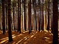 Участок 11.5475 Га пгт Козин под коттеджный городок сосновый лес