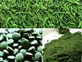 Spirulina Green World, pret de producator!