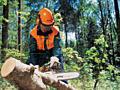 Бензопильщик. Пилю дрова! Распиловка дров и деревьев! Колка дров