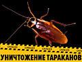 Выведение тараканов, опыт и гарантия