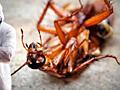 Выведение клопов и тараканов, опыт и гарантия