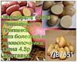 Продается картофель.