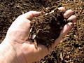 Продам удобрения Грибной компост