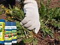 Bioguard БиоГард эффективное средство от сорняков