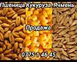 Пшеница. Ячмень. Кукуруза. Макуха. Комбикорм. Солома 35 руб.