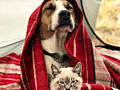 Делаю на заказ индивидуальные обереги для собак и кошек.