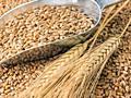Продам Пшеницу, 200кг