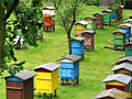 КУПЛЮ улья с пчелами 2-3 семьи. Тирасполь