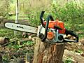 Вырубка и спил деревьев!!! Профессионально и недорого!!!