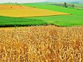 Уникальное предложение! Сельхозназначение. Фасад Киевской трассы