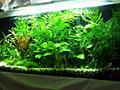 Продам аквариумные растения!